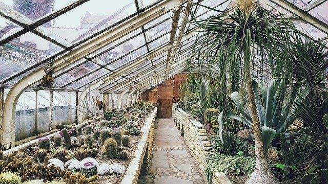 moho kaktusů
