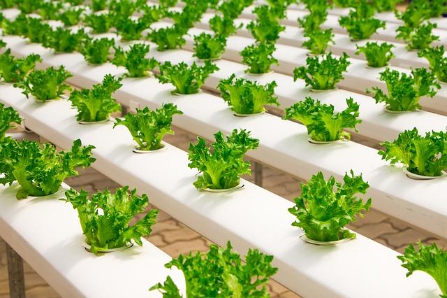 organické zemědělství