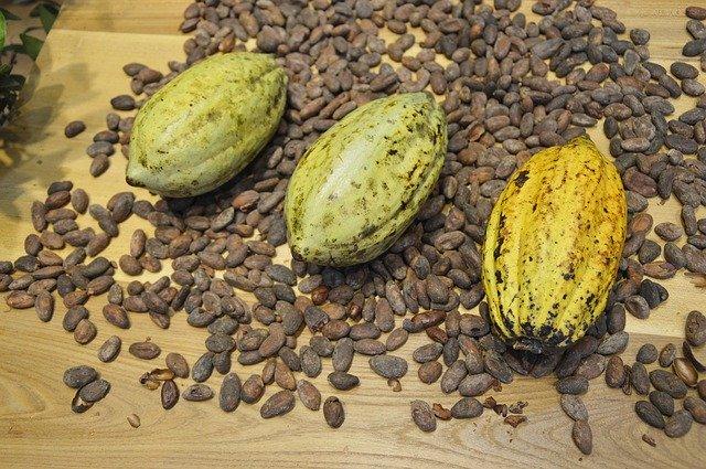 plody a semena kakaovníku